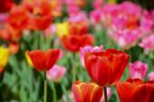 Gyönyörű virágok a kertben