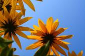gyönyörű virág, növény és természet