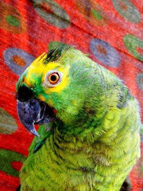 parrot bird, fauna animal