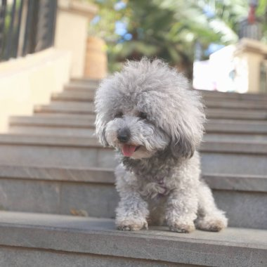 cute dog outdoors at daytime