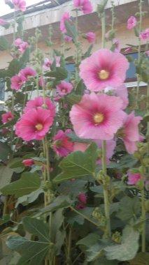 Beautiful blooming fragile flowers