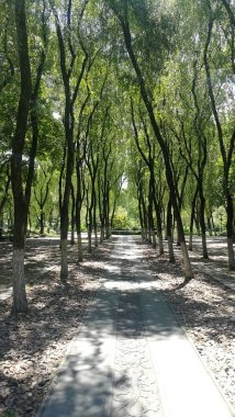 path with trees in the park