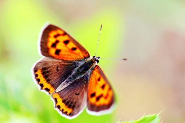 close-up of butterfly, selective focus