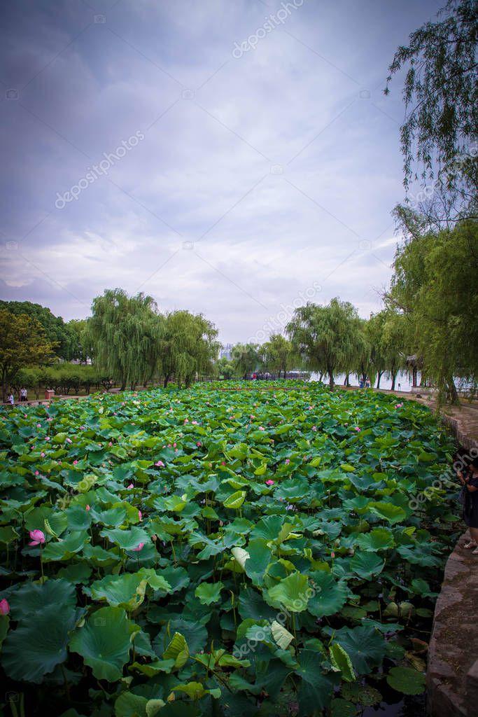 Imaginechina-Tuchong