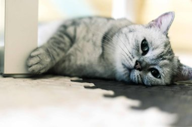 Portrait of cute furry cat