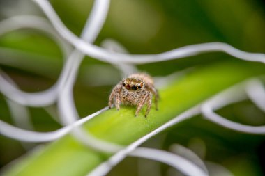 close up of a spider on a green leaf