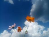 kék ég felhőkkel