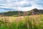 schöne Landschaft mit grünem Gras und blauem Himmel