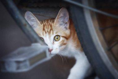 cat sitting on the street