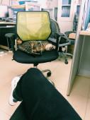 macska ül a széken és vár a repülés