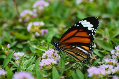 butterfly on a flower, flora and fauna