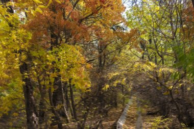 autumn in forest, leaves, flora in nature