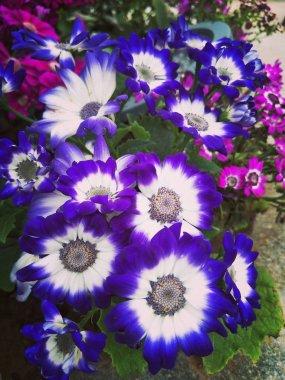 beautiful purple flower background