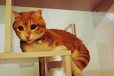 portrait of cute cat