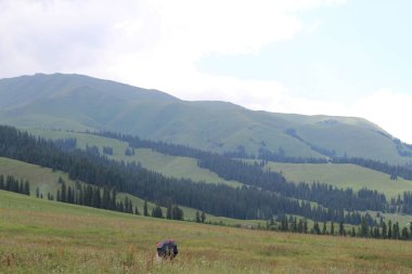 mountain landscape in the carpathian mountains