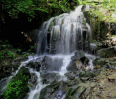 Wasserfall im Wald, Flora der Natur