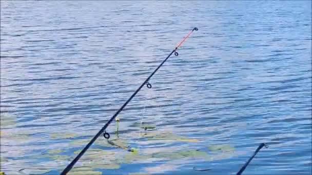 A tó és folyami hal horgászat