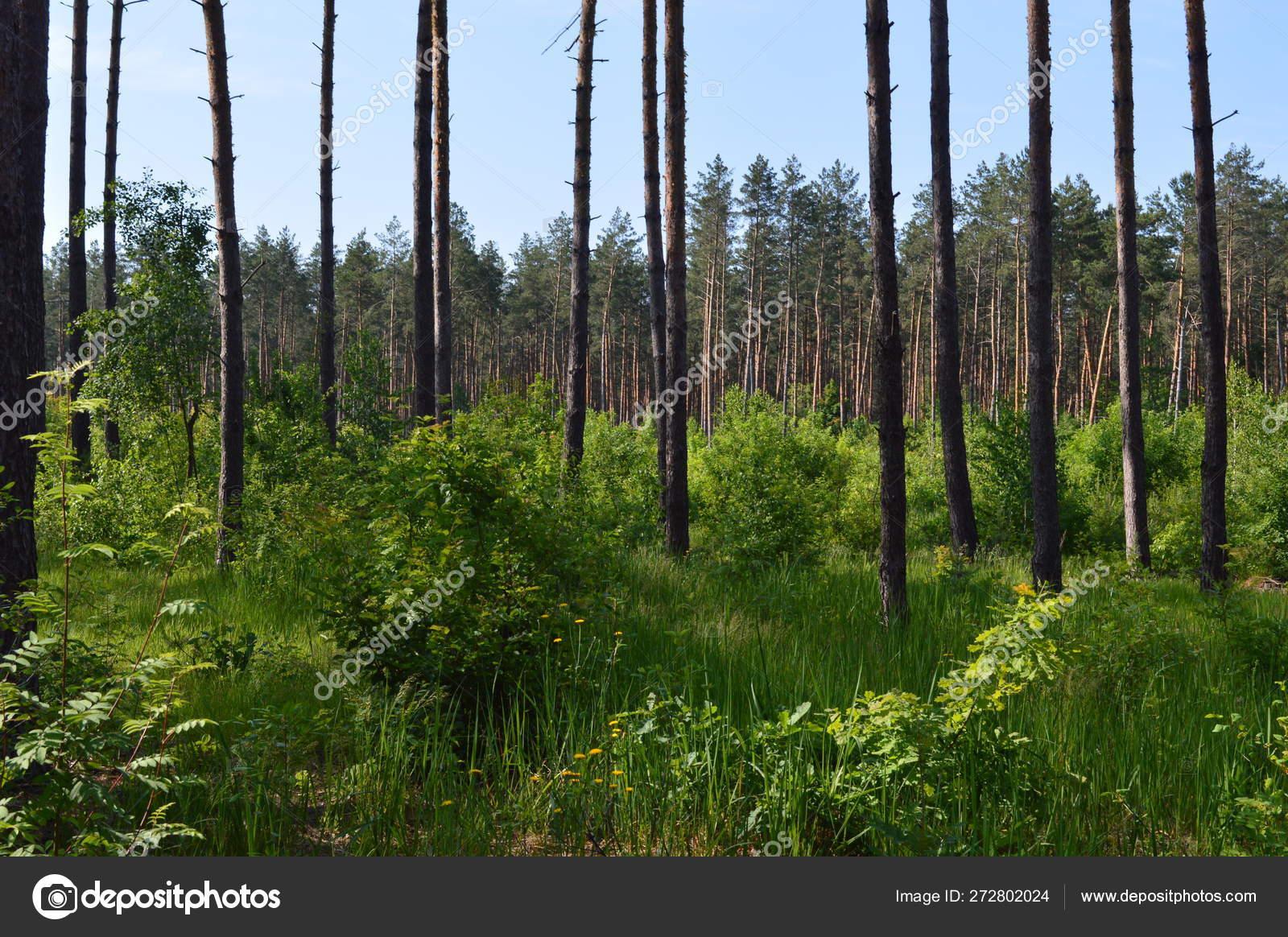 Immagini Di Piante E Alberi paesaggi di piante e alberi forestali estivi — foto stock
