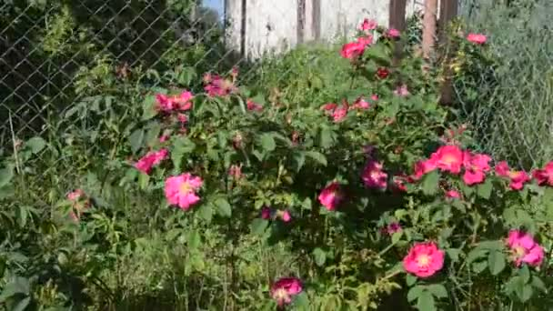 Rostliny houpat ve větru a zahradní nářadí v zemi