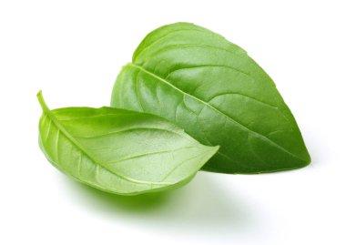 Fresh green basil leaves isolated on white