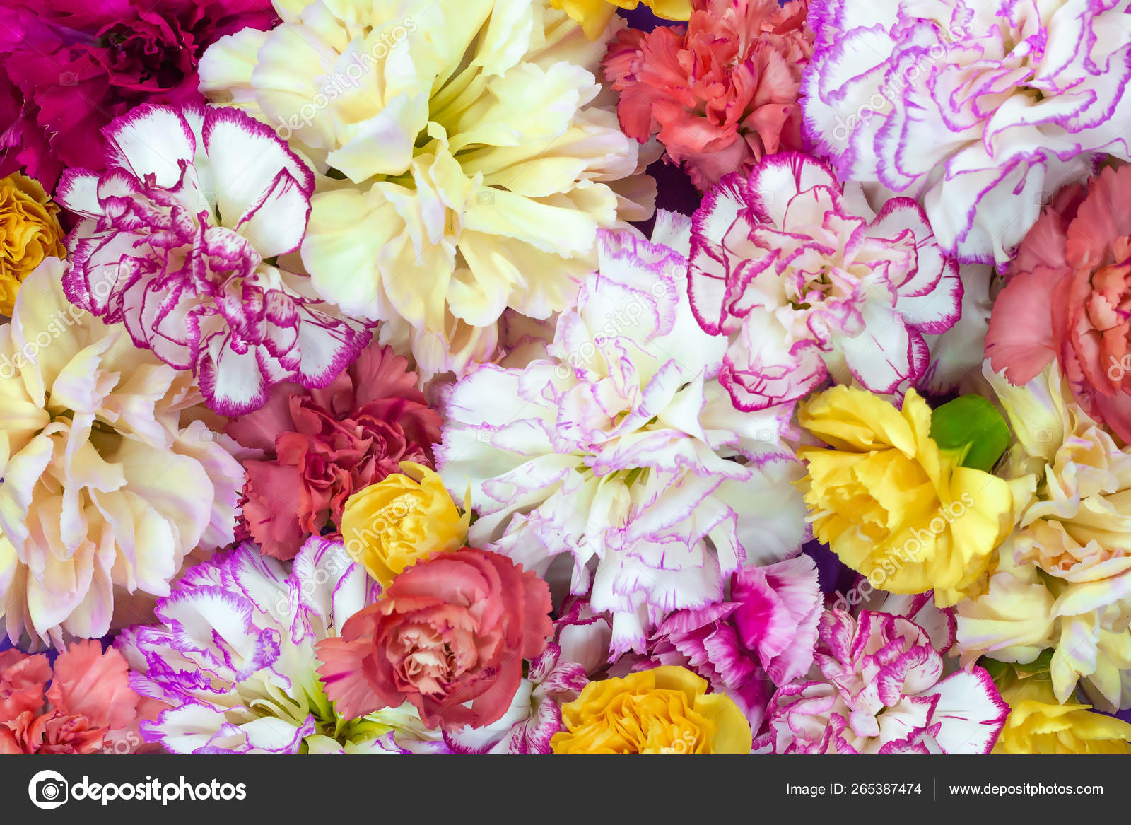 Colorful Flower Bouquet Background Made Of Colorful Carnation Flowers Wall For Background And Wallpaper Stock Photo Image By C 4alovskii Mail Ru 265387474