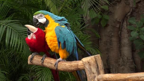 barevné papoušky bojující při sezení na větvi na ostrově džungle, Miami, Florida, USA