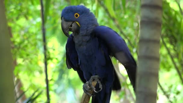 modrý papoušek sedící na větvi na ostrově džungle, Miami, Florida, USA