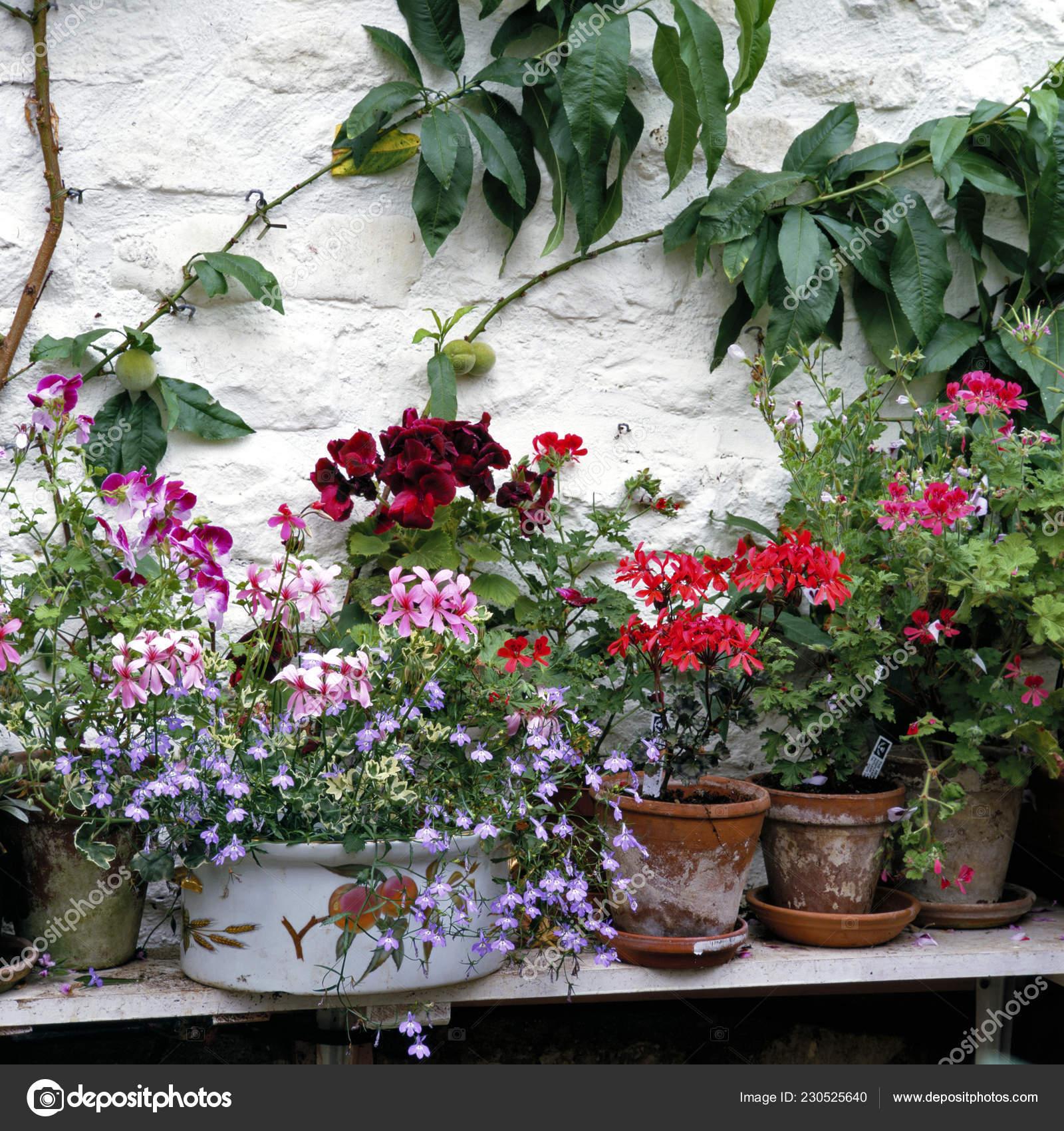 Conteneur Collection Pot Intérieur Une Serre Jardin Avec ...