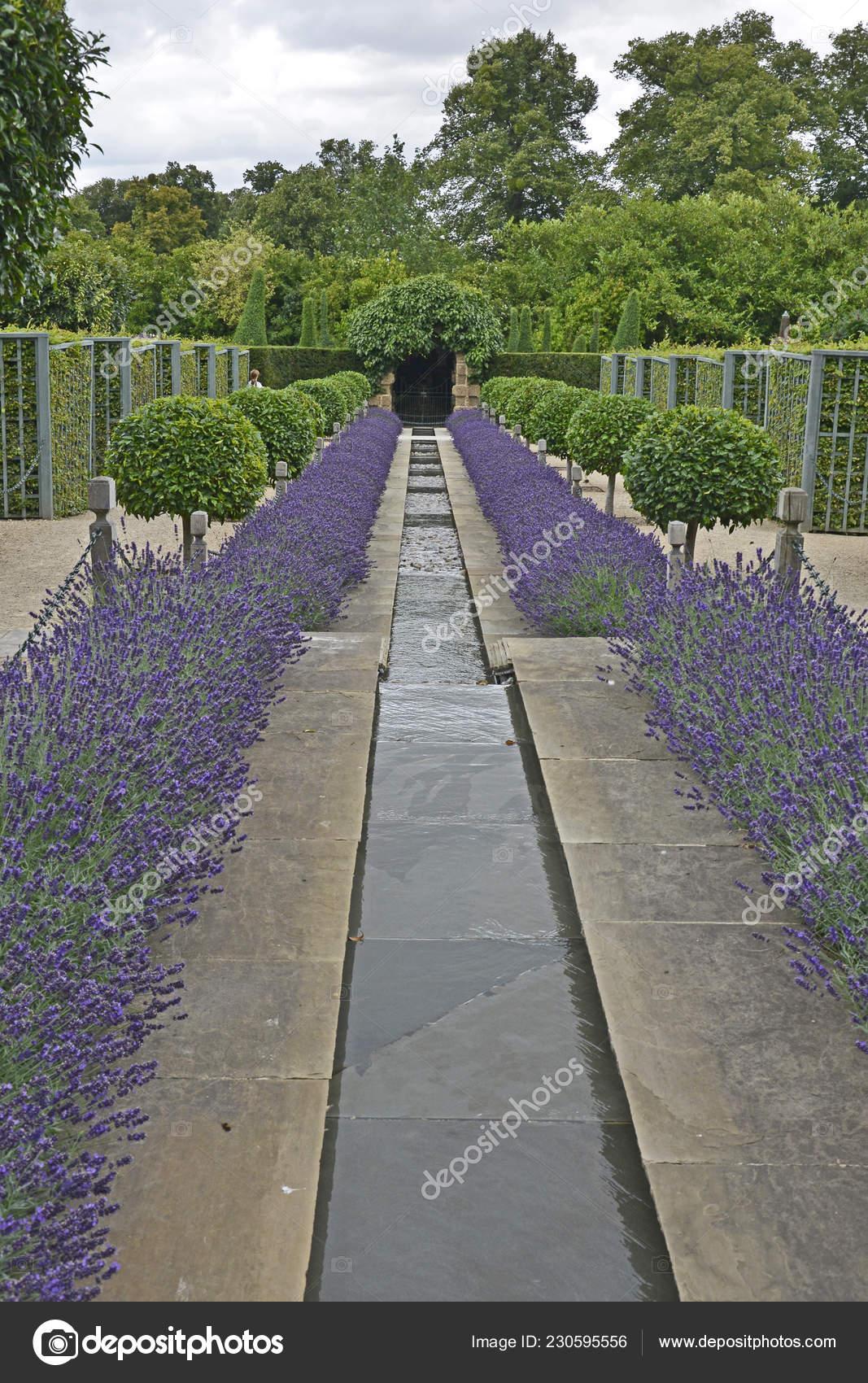 Images Garden Rill Garden Rill Flowing Water Lined Lavender Topiary Borders Country Garden Stock Photo C Gardenguru 230595556