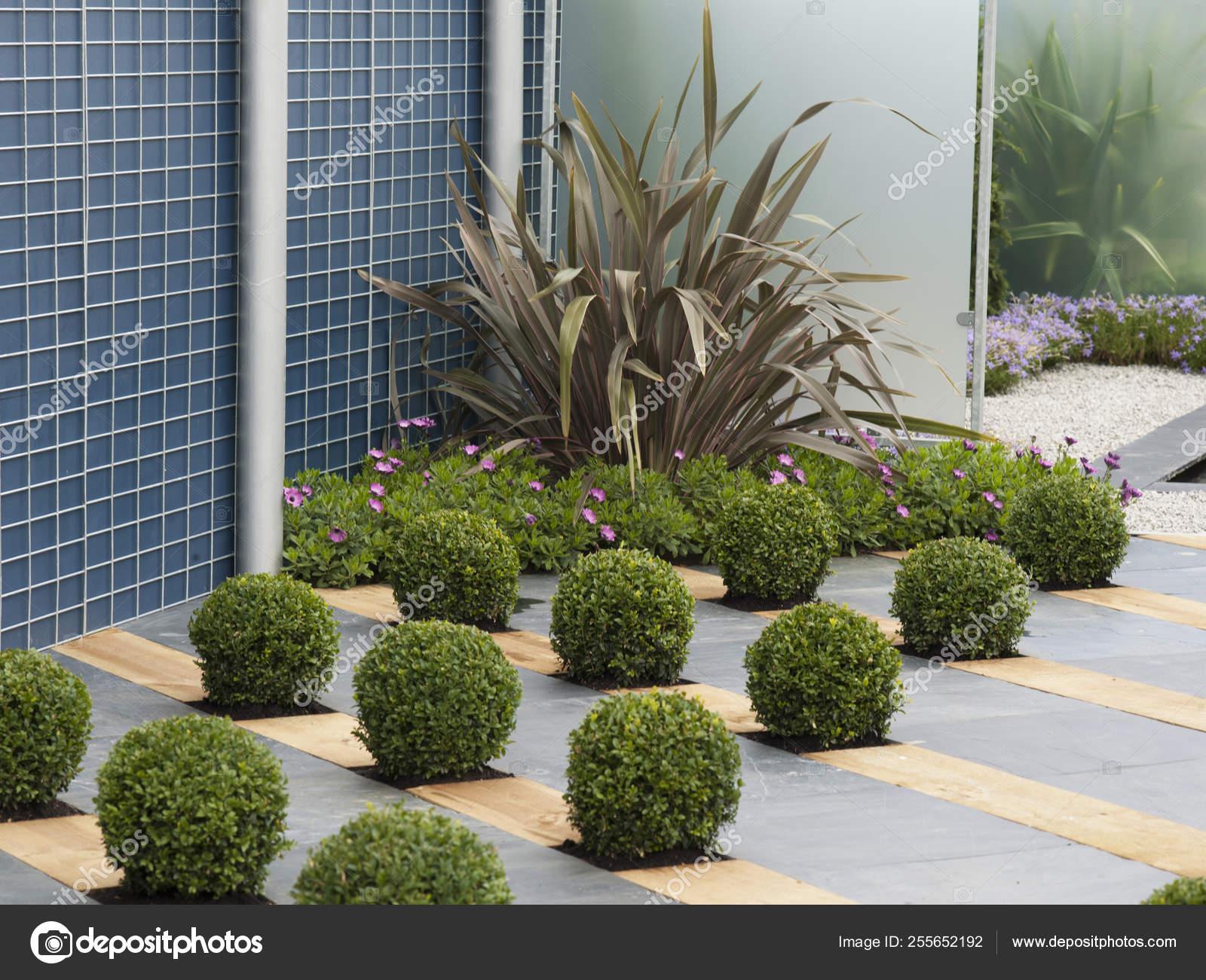 A Modern Garden With Creative Topiary Display In Paved Area Stock Photo C Gardenguru 255652192