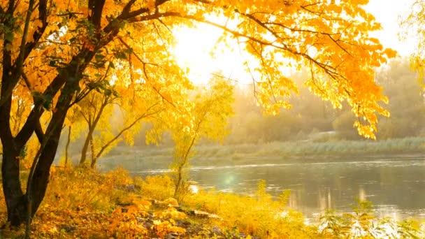 Krásnou podzimní krajinou. Žluté listy. Řeka na pozadí
