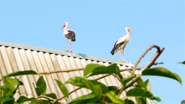 Storks sit on the roof of the house. Blue sky
