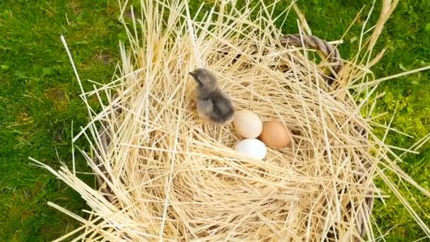 Gyönyörű csaj tojást a kosárba. A kamera csökken le. Közeli kép: