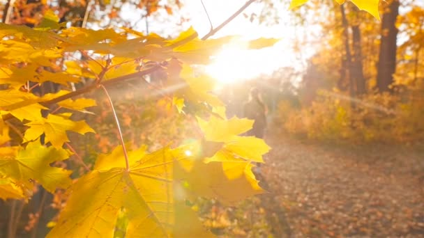 Slender girl is on the autumn path in the forest. Beautiful bright sun rays shine in the lens. Slow motion