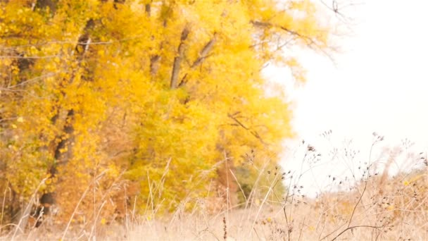 Autumn forest. Leaves are showered from trees. Slow motion