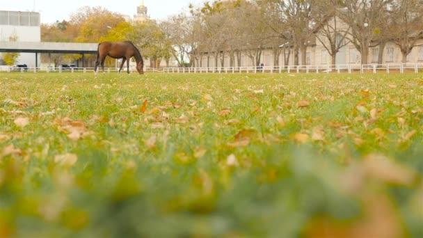 Krásné koně pasoucí se na ranči. Zpomalený pohyb