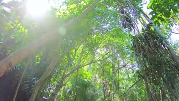 Krásný vodopád v hlubokém lese na vodopád Erawan, národní Park, Kanchanaburi, Thajsko
