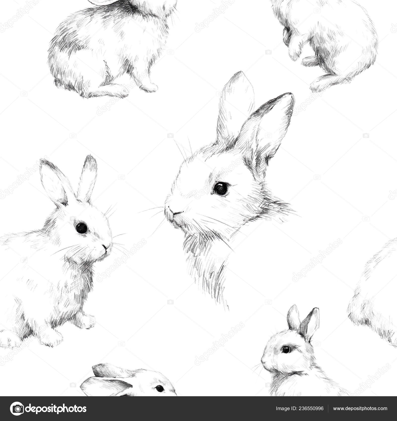 Drawing rabbits collage cute fuzzy pattern pencil sketch stock photo