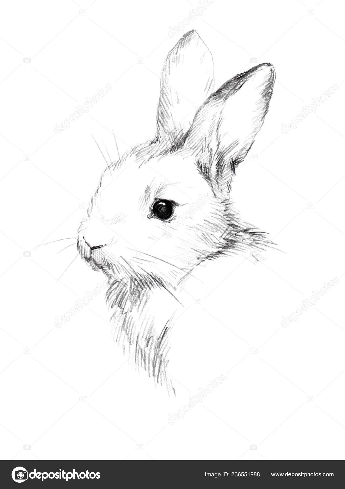 Sketch rabbit small furry pet pencil sketch stock photo