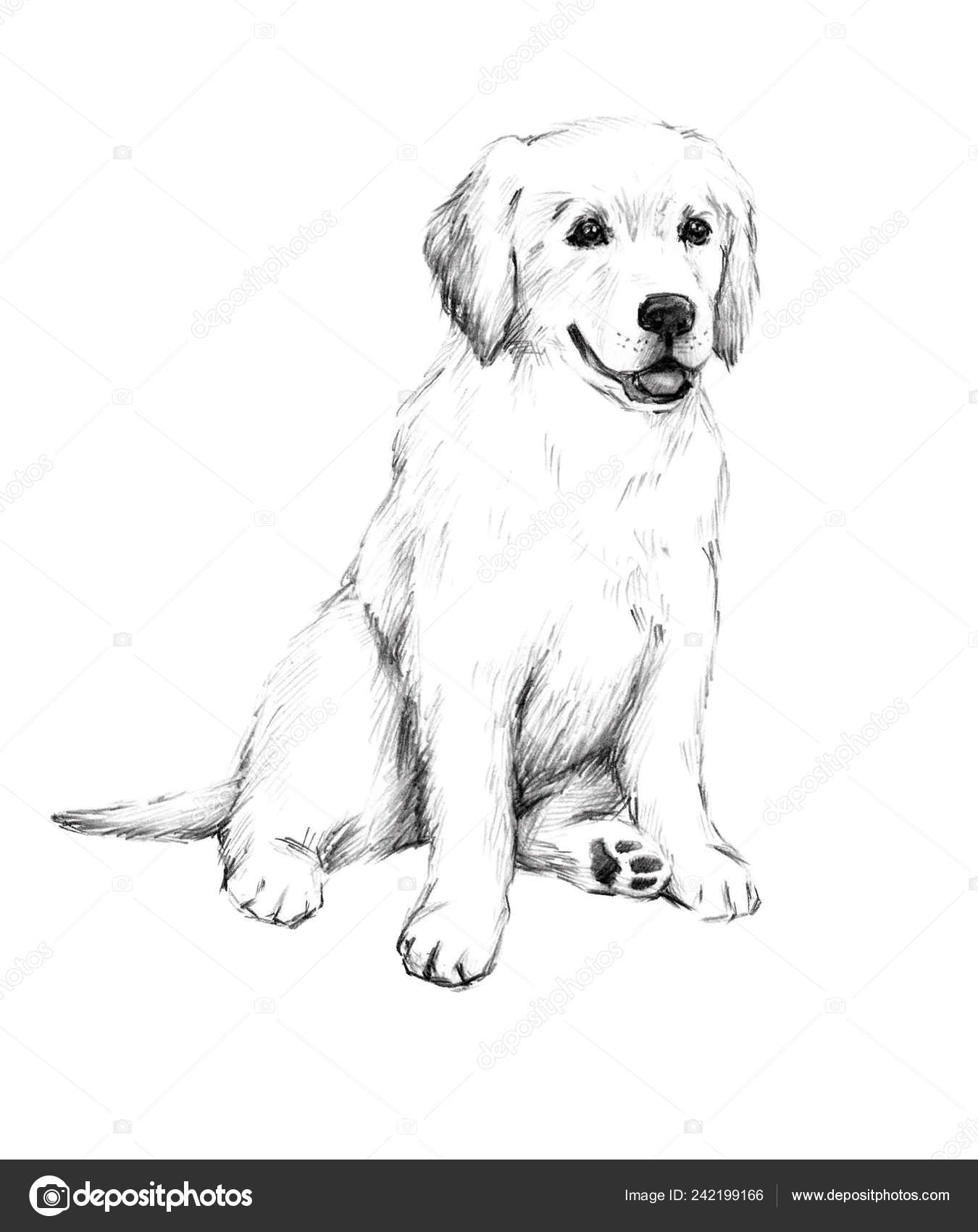 Animal sketch pencil drawing dog cute little puppy illustration pet