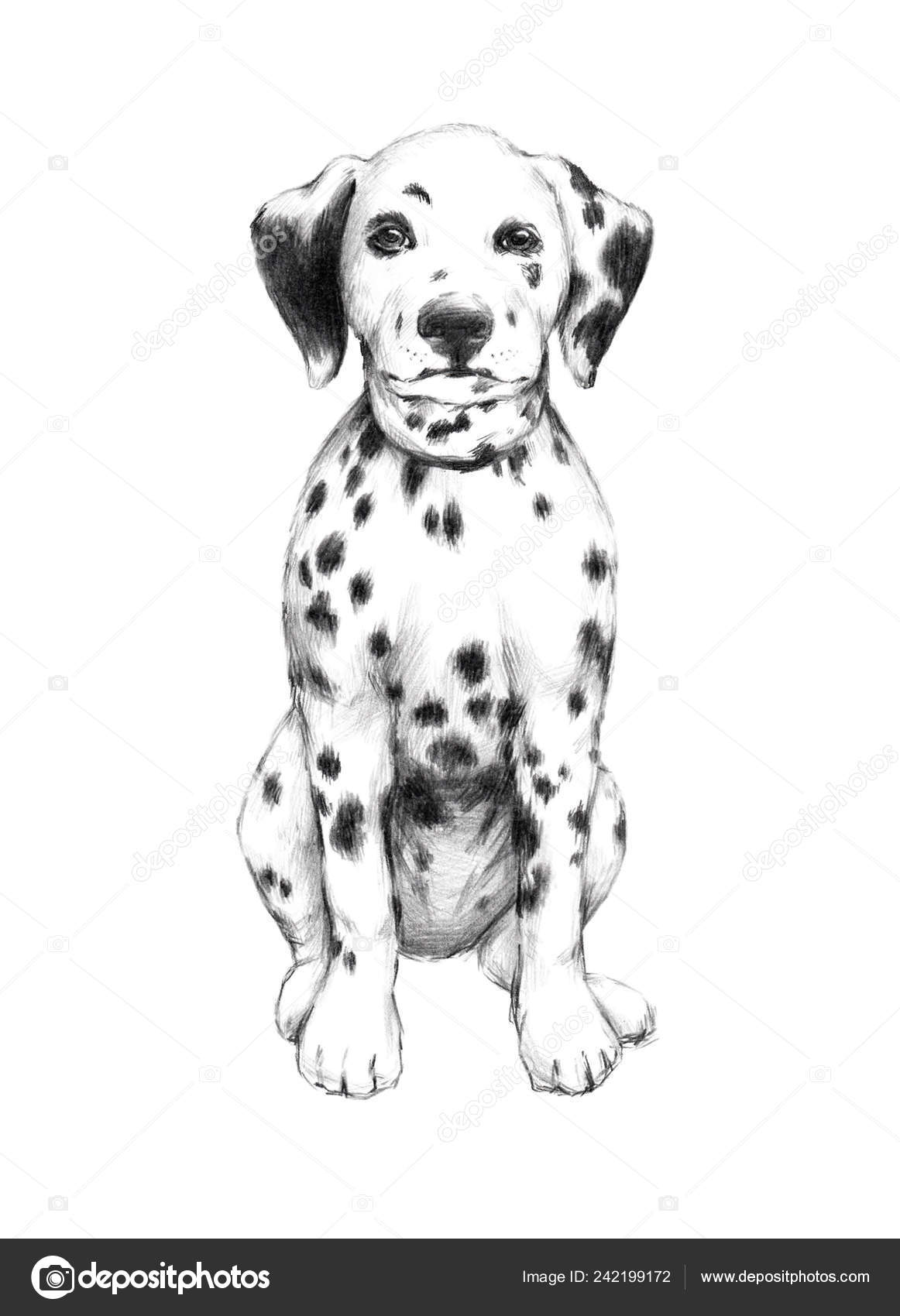 Drawings Puppy Dog Pencil Drawing Animal Sketch Pencil Drawing Dog Cute Little Puppy Illustration Pet Stock Photo C Chepurkoekaterina 242199172