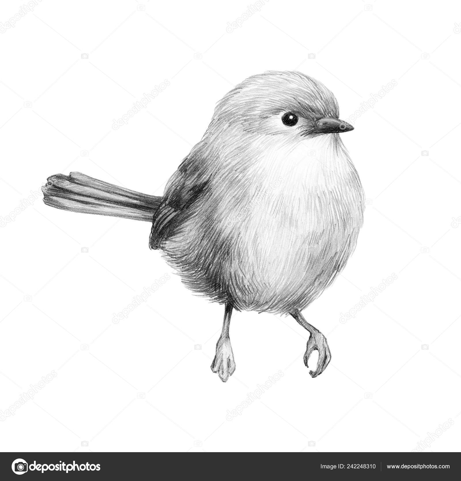 Sketch bird graphics cute little bird pencil drawing print illustration stock photo