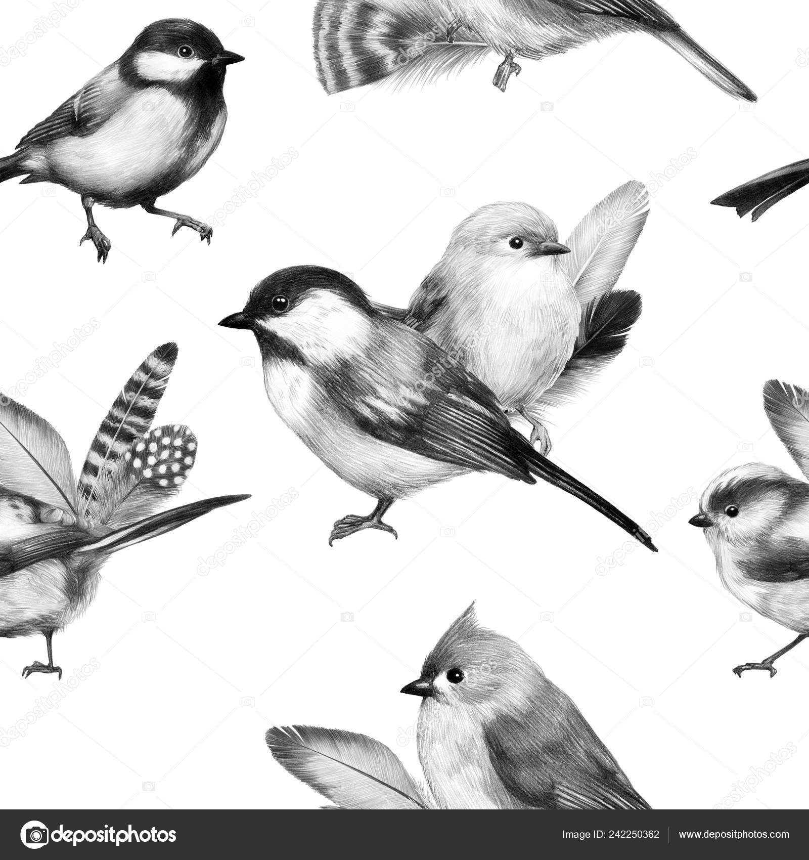 Sketch bird graphics cute little bird pencil drawing print