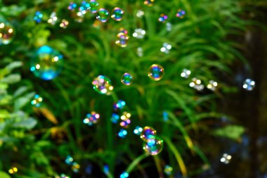 Soap bubbles on a natural green background.