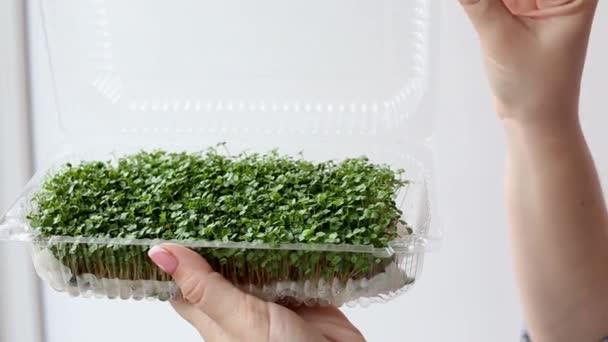Nő tart és ápolja a hajtások microgreen növények, kezét közelről a fehér háttér.