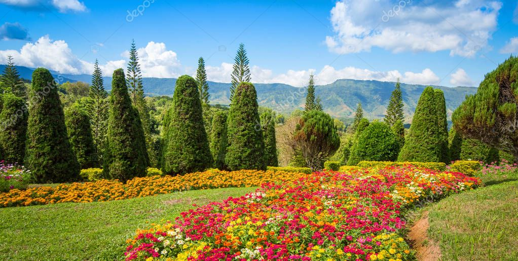 pine tree garden / flower and garden on hill with pine trees for christmas - landscape plateau on mountain background / Kasad Tee Sung Phurua Loei agriculture on mountain thailand