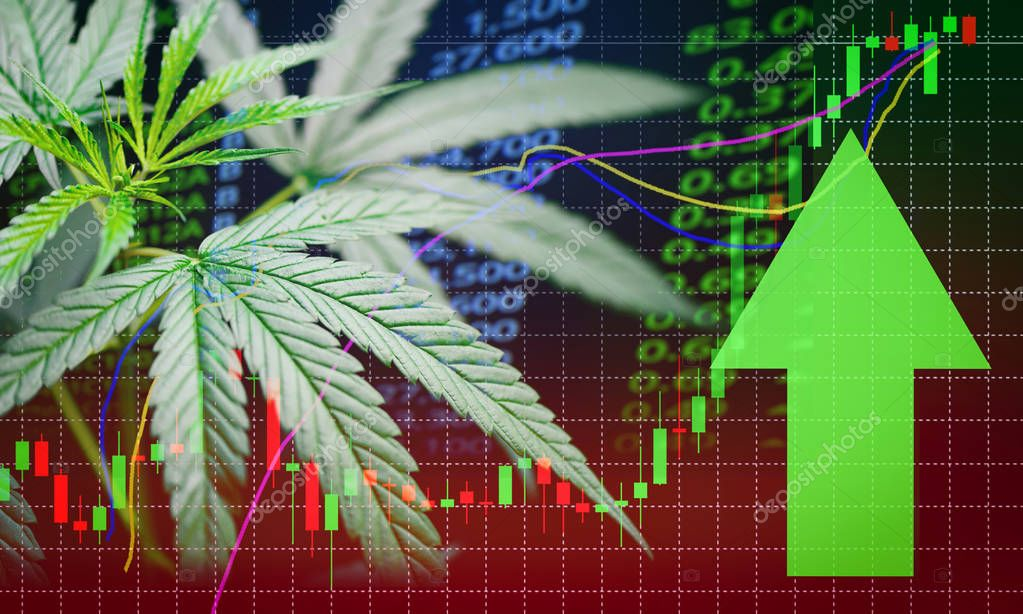 Business marijuana leaves cannabis stock success market price gr