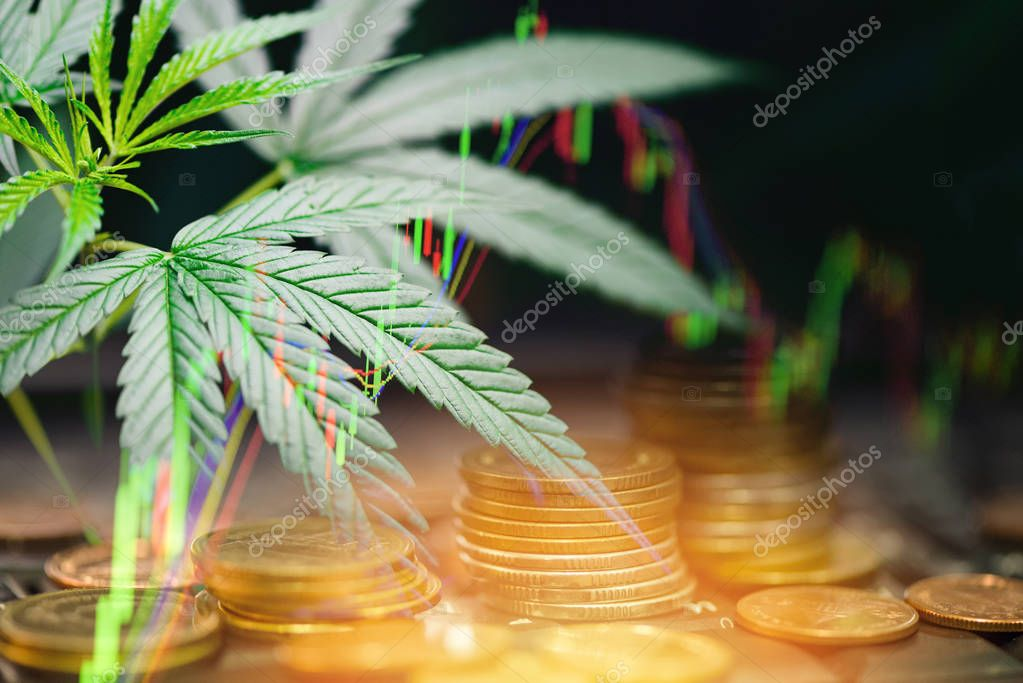 Business marijuana leaves cannabis stock exchange market