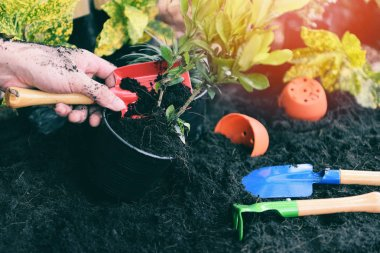 plant in hand for planting in the garden / growing plant works o