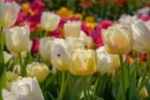 gyönyörű színes virágzó virág a friss kertben az örömére és vonzó környezet.